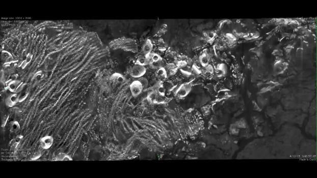 x-ray microscopy image