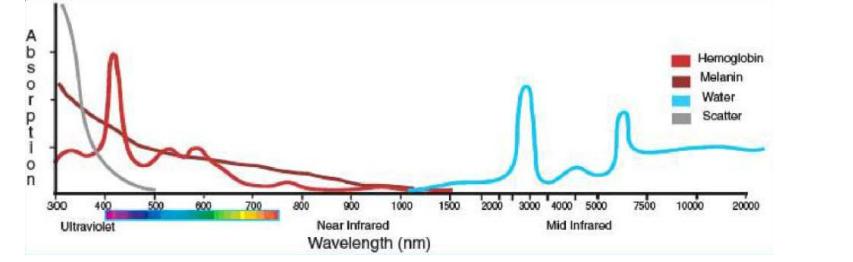 Laser tissue interactions chromophores
