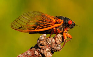 LED Based Insect Traps: Perfecting the Choice of Wavelengths